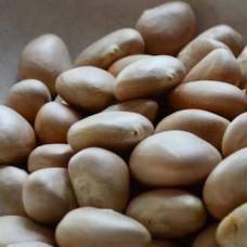Jackfruit Seeds 250g