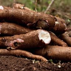 Cassava 500g