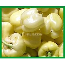 Capsicum White 500g