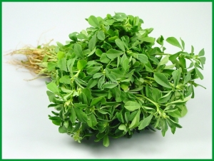 Methi Leaves Bunch